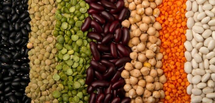 Les protéines végétales font elles maigrir