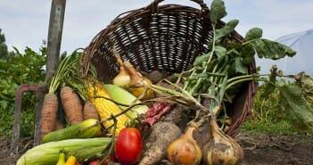 Les produits d'agriculture biologique font-ils maigrir ?