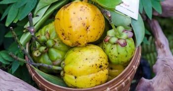 Les meilleures plantes anti-cellulite