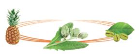 Anaca 3 pour maigrir for Plante amincissante