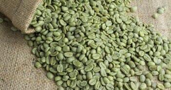 Le café vert minceur