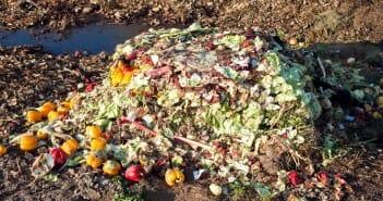 gaspillage alimentaire et régime