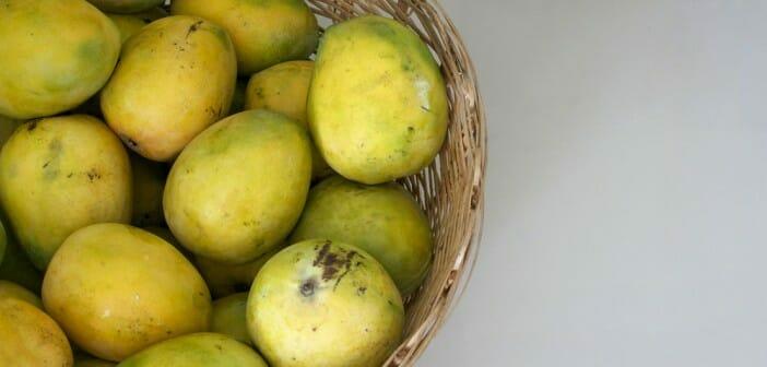 mangue d afrique pour maigrir