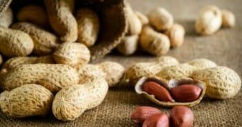 Les cacahuètes font-elles grossir ?
